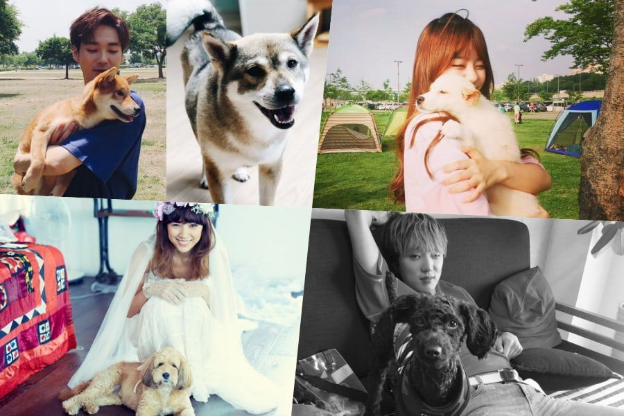 Celebrities Who Adopted Their Dogs And Gave Them A Second Chance At Life