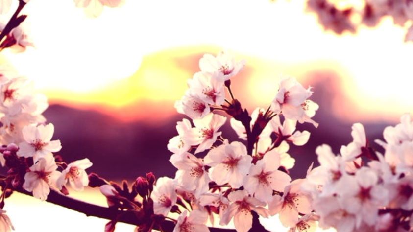 Love In Blossom