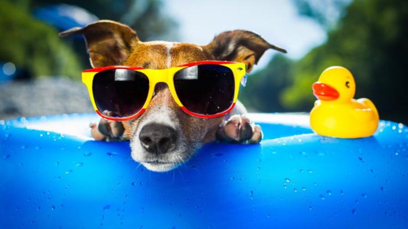 Dog Days To Rest- Summer 2018