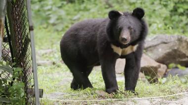 Bears Episode 4