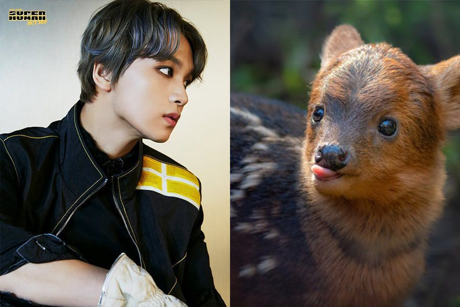 Watch: NCT 127's Haechan Meets Haechan, The Adorable Pudu Fawn Named After Him