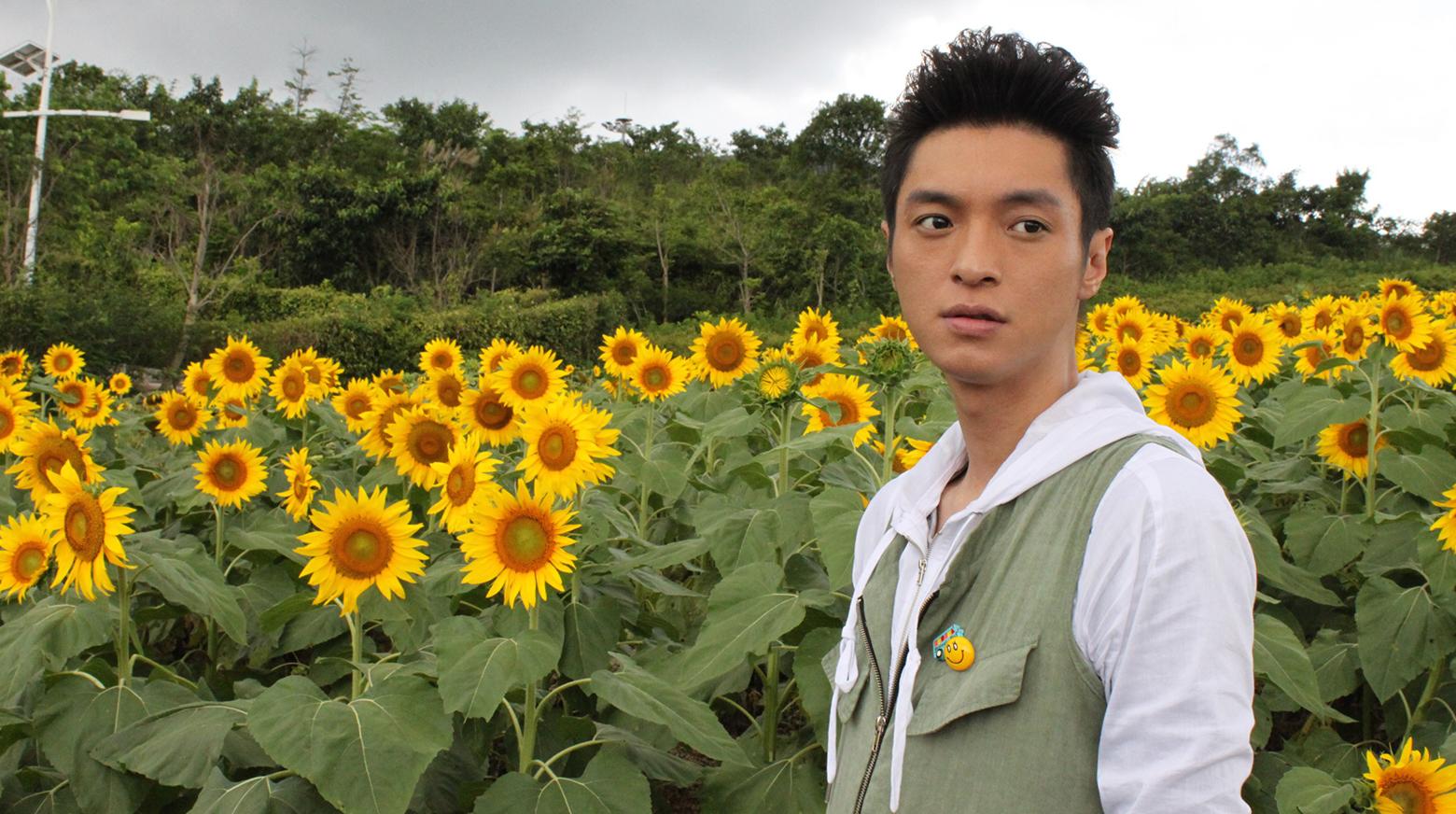 Girasoles en flor