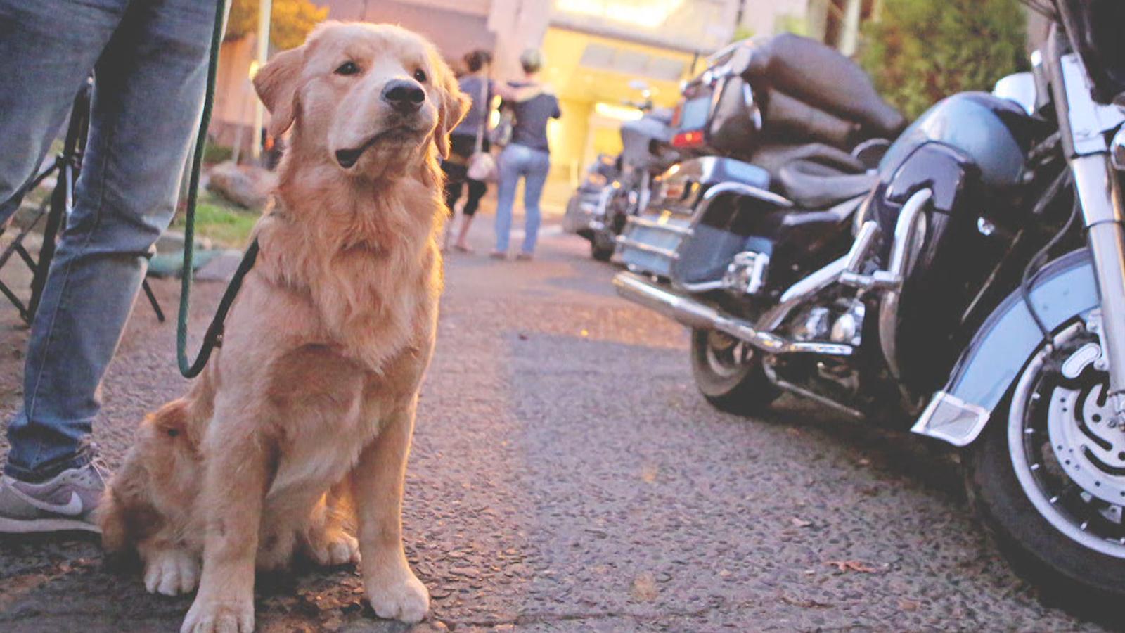 Pets GO! Doggy Trip Episode 5