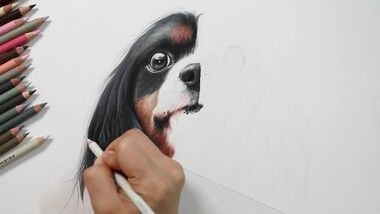 Drawing Hands Episode 104: Speed Drawing a Cavalier King Charles Spaniel