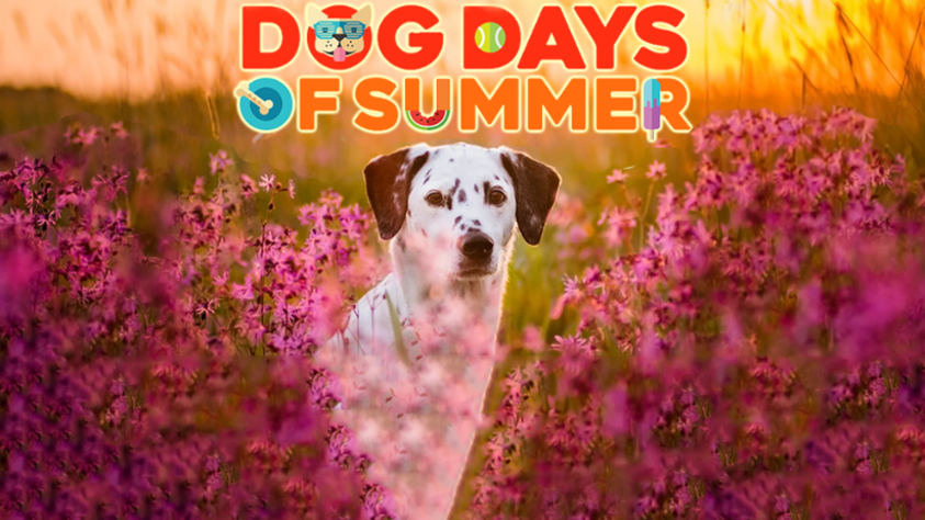 Lazy-Hazy-Crazy Dog Days of Summer!