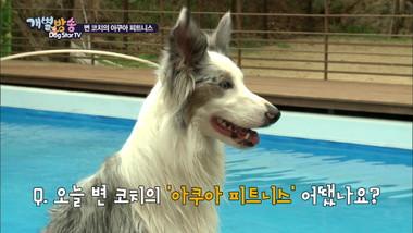 Dog Star TV Episode 2