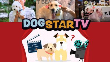 Dog Star TV