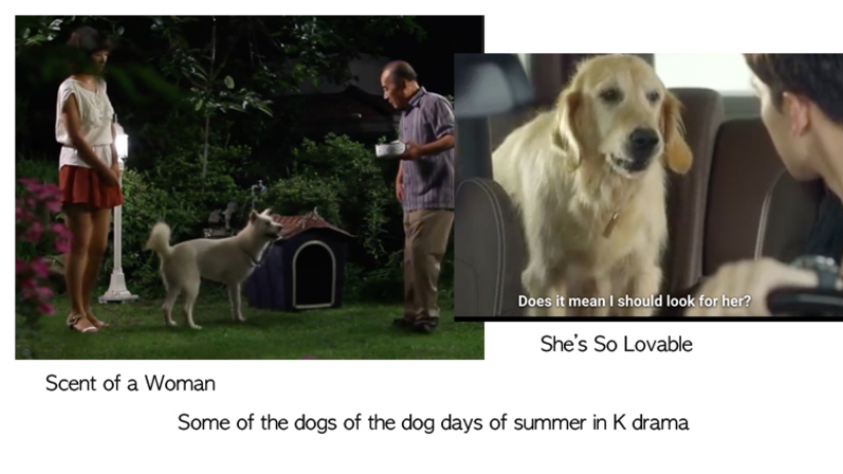 Cool off on the Dog Days with Dramas with Dogs