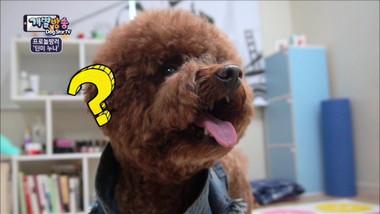 Dog Star TV Episode 5
