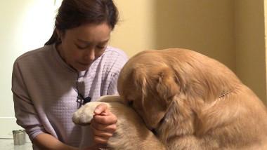 Pets GO! Doggy Trip Episode 3
