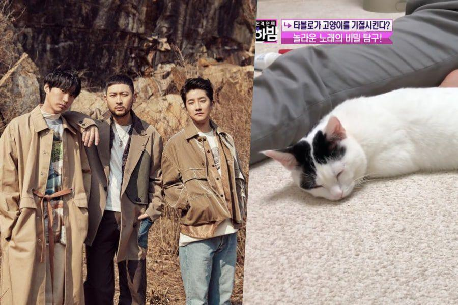 "Experts Share Insight Into Why Epik High's ""Lullaby For A Cat"" Really Works"