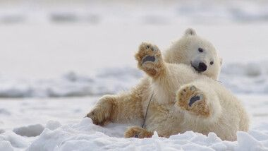 Bears Episode 2