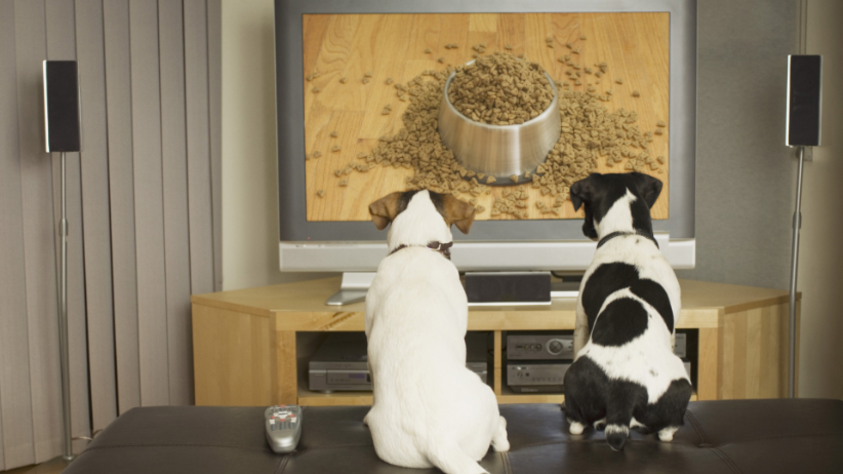 Dog Days , drama's to watch with your dog ;)