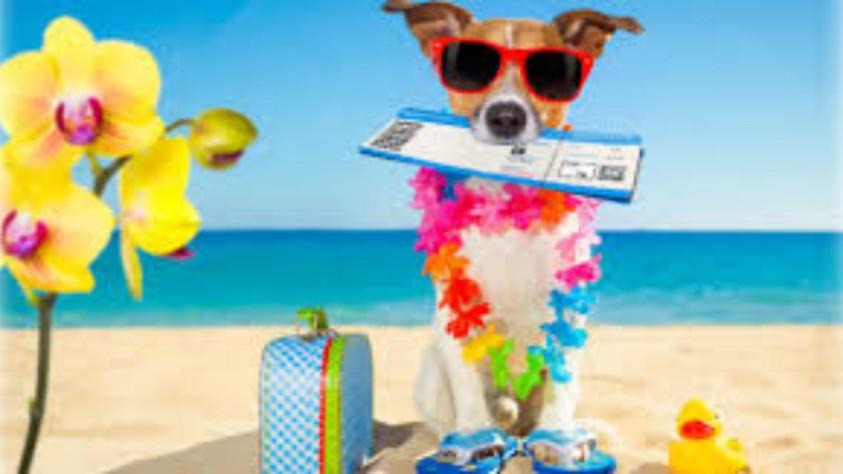 Steamy Hot Summer Love on Dog Days