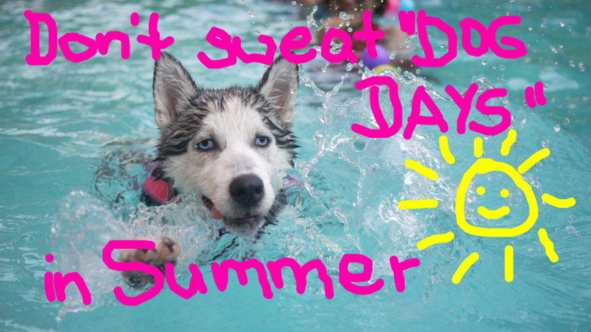 Don't Sweat on Dog Days in Summer!