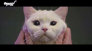 Teaser: Meow, the Secret Boy