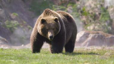 Bears Episode 5